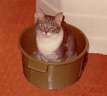 cat in washtub